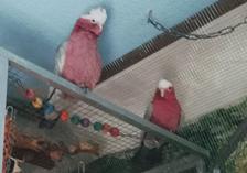 Papageientherapiezimmer